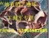 山东省鱼台县榆耳生产厂家